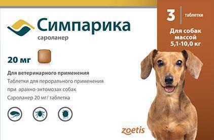 Как избавить собаку от блох и клещей
