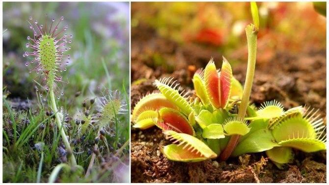 Растения от мух в доме: что посадить