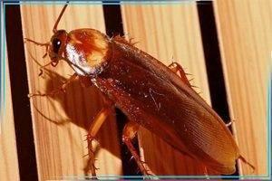Особенности использования лямбда зона от тараканов