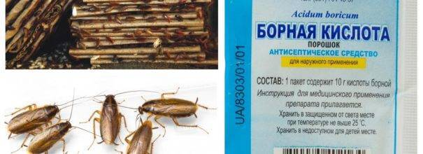 Борная кислота от тараканов: проверенный способ уничтожения паразитов