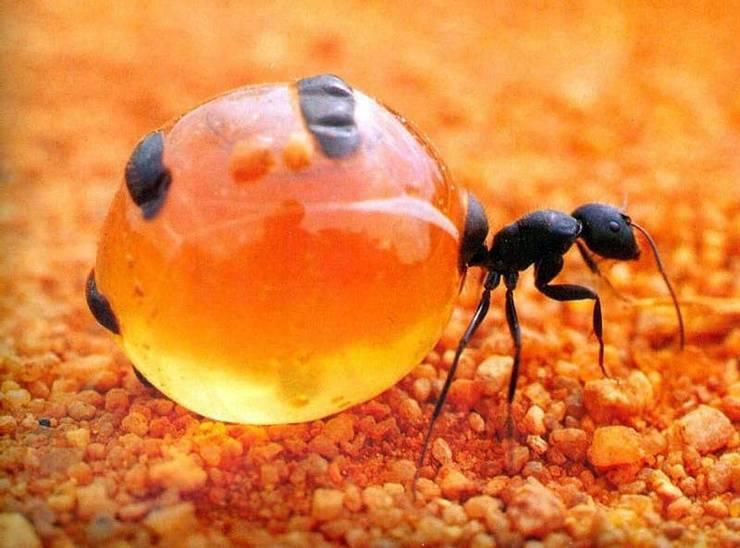 15 интересных фактов о муравьях