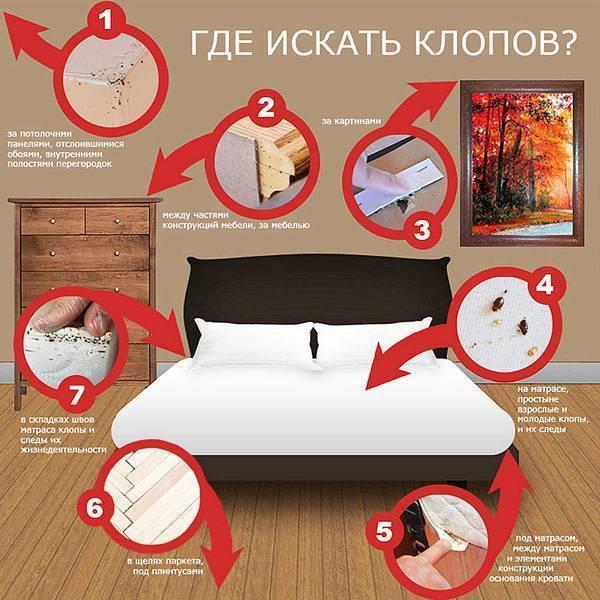 Клопы в кровати: как избавиться от них 6-ю способами